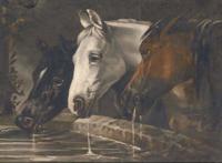 Three horses at a watering trough