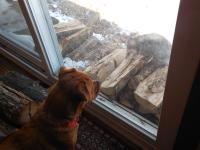Dog with possum 4