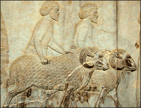 Wench sheep Assyrian delegation perspolis